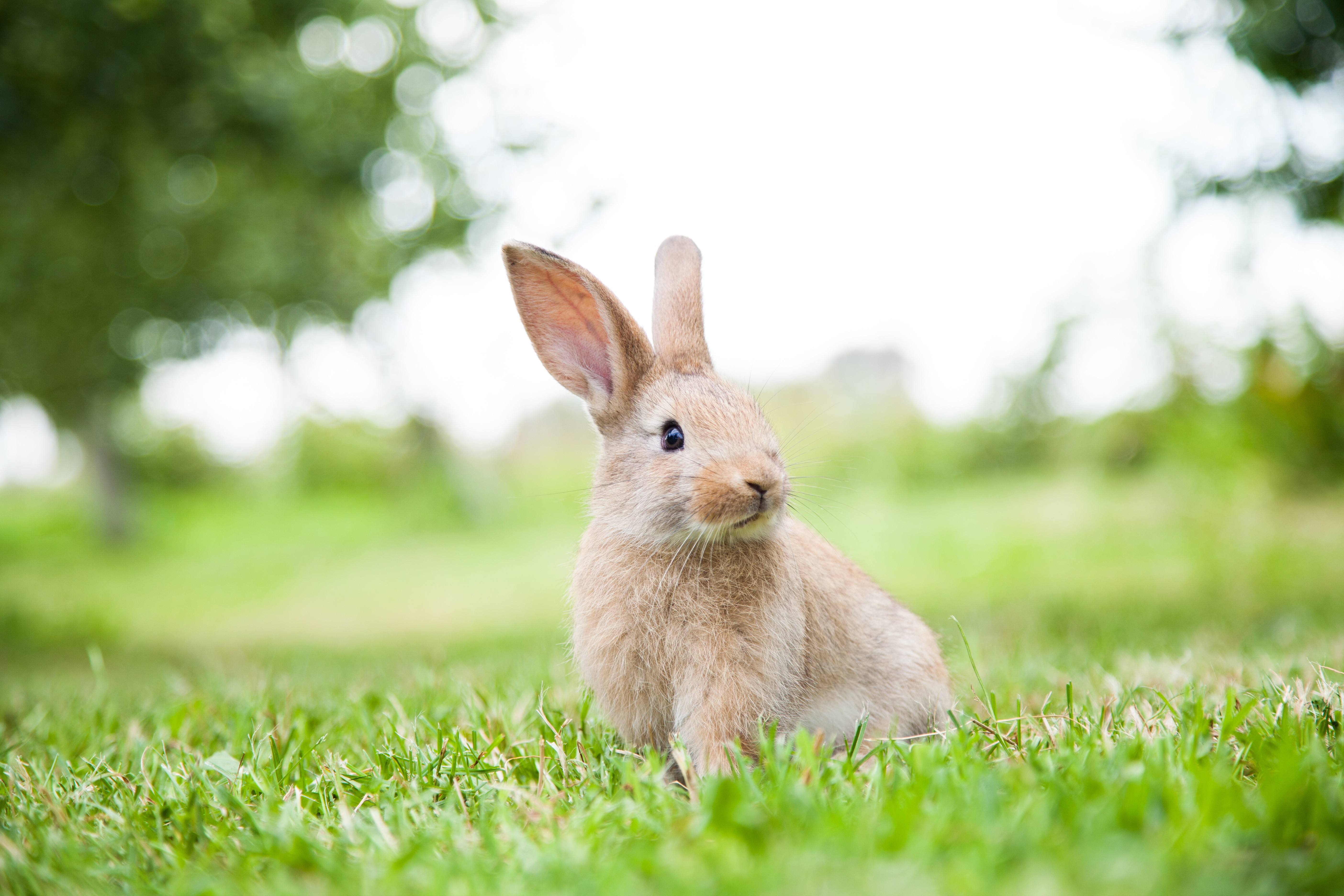 Snuggle up with some fluffy bunnies at the Nook on ...