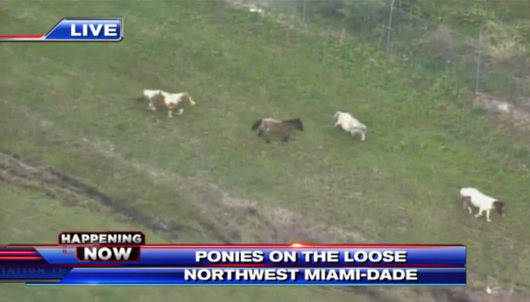 SCREENGRAB VIA WSVN