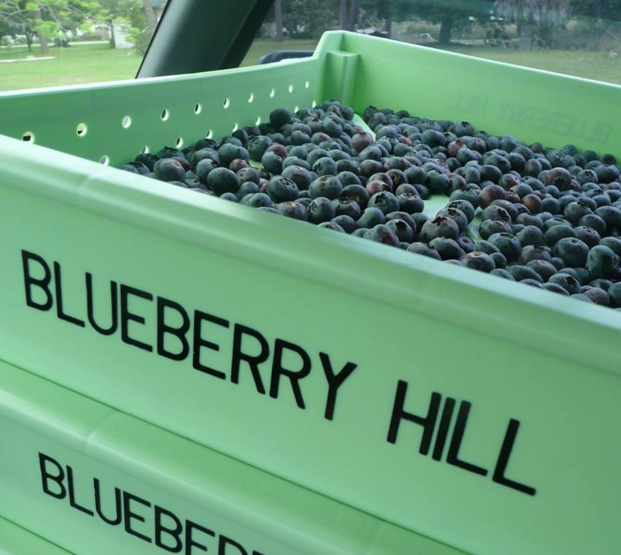 PHOTO COURTESY BLUEBERRY HILL FARM