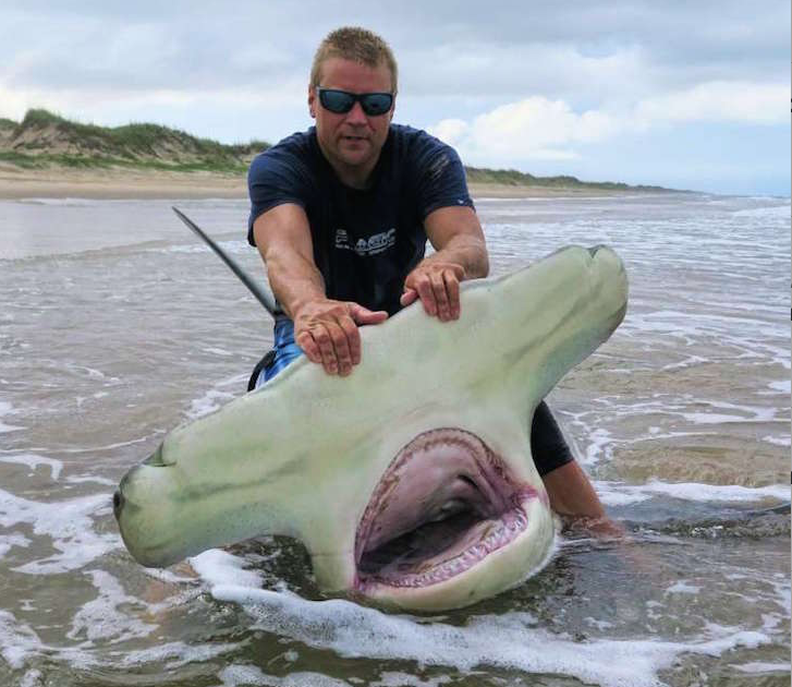Man catches staggeringly big 13 foot long hammerhead shark for Catching big fish