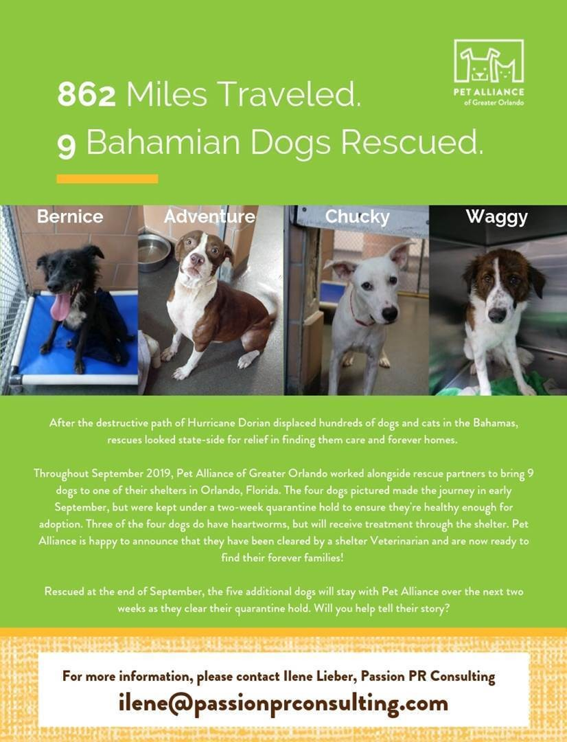 dogs from the bahamas are up for adoption at the pet