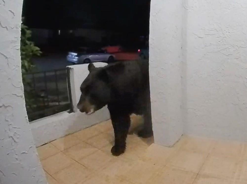 Altamonte Springs doorbell camera captures enormous black bear on front porch