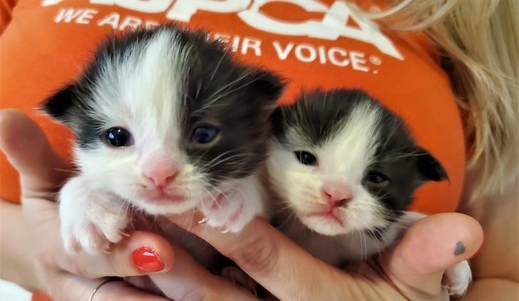 PHOTO COURTESY ASPCA/FACEBOOK