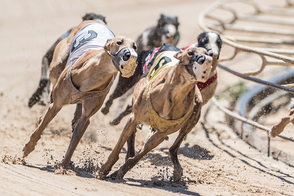 orlando dog track