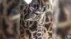 Disney wants you to help name this baby giraffe at Animal Kingdom