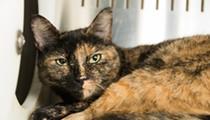 Gimme Shelter: Meet Tillie