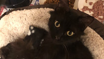 Gimme Shelter: Meet Midnight!
