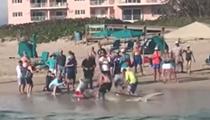 Florida fisherman criticized for using 15-foot hammerhead shark as selfie prop