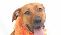 Gimme Shelter: Meet Cleo!