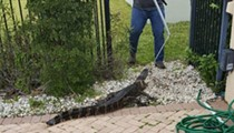 Trappers wrangle alligator out of Lake Nona swimming pool