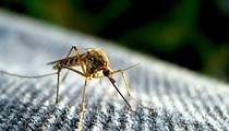 Orange County awarded $325,000 grant to combat Zika virus