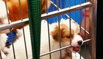 Lake County bans retail sales of dogs, cats