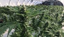 Judge blasts Florida's medical marijuana licensing process as 'colossal blunder'