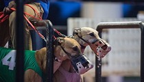 Sides square off on Greyhound racing ban in Florida