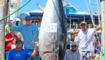 Look at this massive 826-pound tuna, which is now the new Florida state record