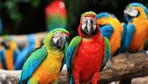 Avian aficionados flock together at Central Florida Fairgrounds for an Exotic Bird Expo