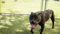 Gimme Shelter: Meet Sammy!