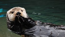Otter Fest