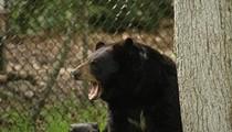 Lawsuit seeks to block return of bear hunting to Florida