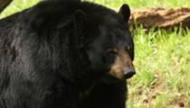 Florida is selling bear-hunting permits despite a lawsuit to block hunt