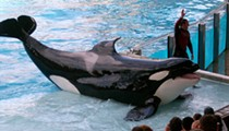 SeaWorld sees profits plummet $36.1 million in second quarter