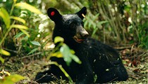 Florida bear hunters are getting angry emails from protesters