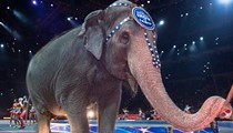 Feld Entertainment announces early retirement for all Ringling Bros. circus elephants