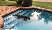 An 8 foot crocodile was found in a Florida man's pool