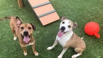 Gimme Shelter: Meet Gracy and Bear!
