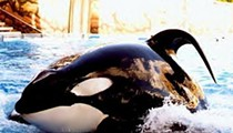 SeaWorld reports that Tilikum the orca is seriously ill
