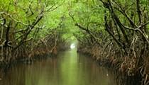 Rick Scott approves 'Legacy Florida' money for Everglades, Lake Apopka
