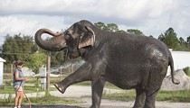 Florida elephant center with strong ties to Disney shuts down after numerous deaths