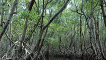 House panel approves full $200 million in funding for Florida Everglades restoration