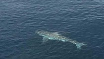 In case you forgot sharks live in the water, a 14-foot great white was spotted near Port Canaveral yesterday