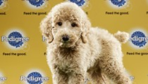 Orlando rescue puppies to play in Animal Planet's Puppy Bowl XIII