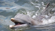 There's $38K reward for tips on the person who stabbed a Florida bottlenose dolphin to death