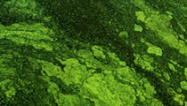 To protect Florida's water, Blue-Green Algae Task Force recommends regulating septic tanks