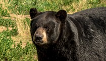 Florida's bear-control plan leaves hunting on the table
