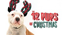 A dozen adoptable Orlando dogs who would love to find a home for the holidays