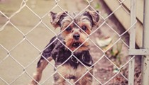 Domestic abusers in Florida could lose contact with pets