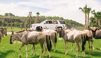 Osceola attraction Wild Florida to sell annual passes for drive-thru safari