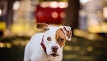 Super sweet Angelica has been at the Orange County pet shelter for way too long