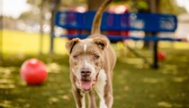 Rascal is looking for a good home and he deserves one; meet him at Orange County Animal Shelter