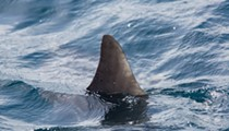 Florida lawmakers water down bill that would've banned the sale of shark fins