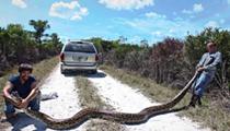 Florida hunters catch massive 15-foot Burmese python