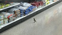 Just a bird shopping for birdseed in a Publix