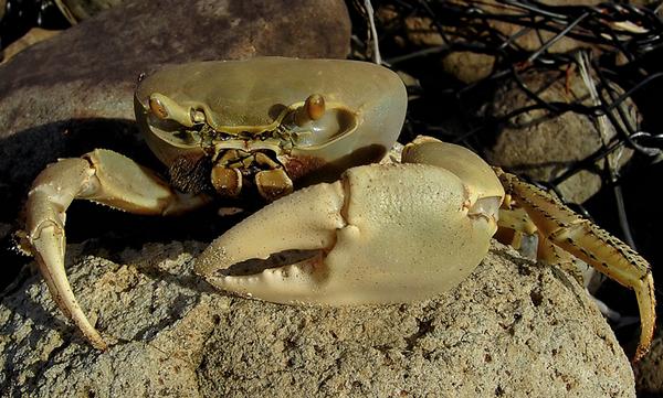U Have Crabs Central Florida...