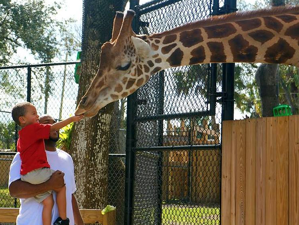 Central Florida Zoo Plans 85 Million Renovation Blogs