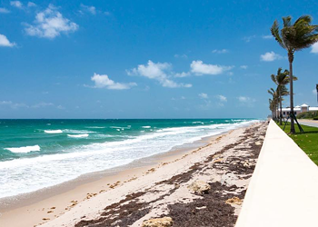 Seaweed is taking over Florida beaches and it's likely to get worse