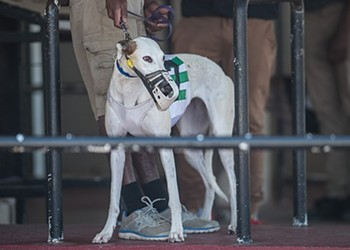 Florida seeks to keep greyhound racing ban on ballot